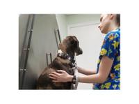 Maybeck Animal Hospital (3) - Hospitals & Clinics