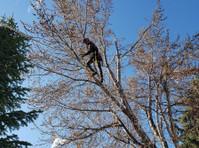 Timber Ridge Tree Service (3) - Gardeners & Landscaping