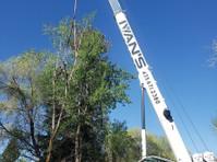 Timber Ridge Tree Service (8) - Gardeners & Landscaping