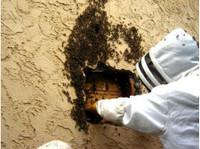 Eastern Arizona Exterminating (1) - Home & Garden Services