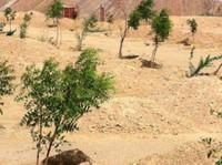 Rechsand (6) - Gardeners & Landscaping