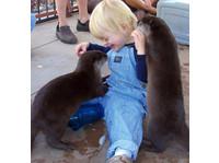 Nurtured By Nature - Pet services