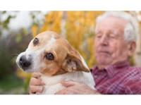Kind Pet Cremation (1) - Pet services