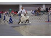 Merryfield School of Pet Grooming (2) - Pet services