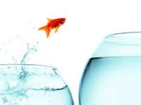 Behavioral Health Network Resources (7) - Marketing & PR