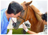 Abba Vet Supply (3) - Pet services