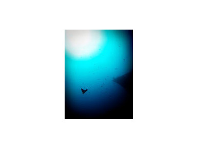 Kaimana Divers - Water Sports, Diving & Scuba