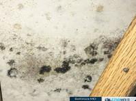 fdp mold remediation (4) - Construction Services