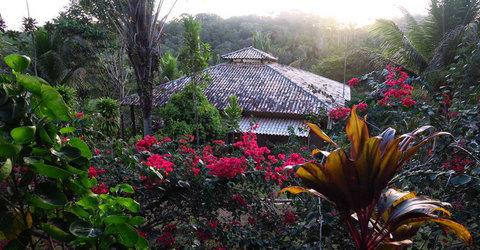 Spirit Vine Ayahuasca Retreat Center - Travel sites