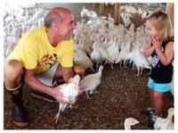 DiPaola Turkey Farms (3) - Organic food