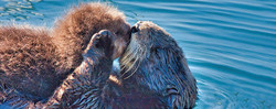 After Dark: Sea Otters