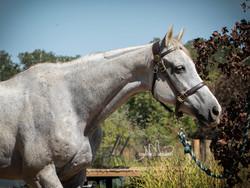 Bluebonnet Horse Expo & Rescue Horse Training Challenge