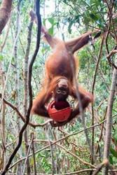 Borneo Wildlife Marathon
