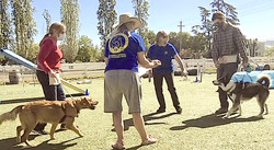 Canine Good Citizen Training/Testing - Napa