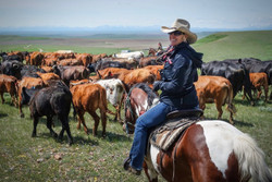 Cattle Drive and Stampede
