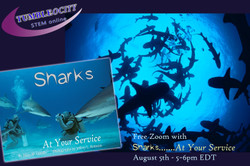 Do You Know a 7 – 9 year old Who Loves Learning about Sharks?