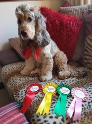 East Anglian We love Dogs