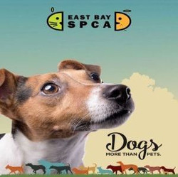 East Bay Spca Dogs: More Than Pets Exhibit