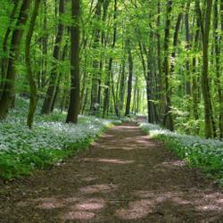 Forest Bathing at Burnham Wildlife Corridor