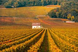 French Wine Basics [Nov 11]
