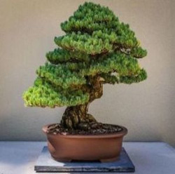 From Bonsai to Chinese Gardens - the story of philosophy and design