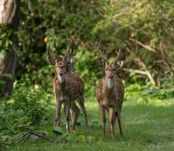 Kabini Wildlife Trip
