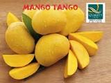 Mango Tango Festival