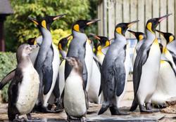 Penguin Week this May Half Term at Birdland