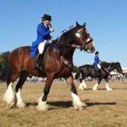 Robin Hood Country Show 2021