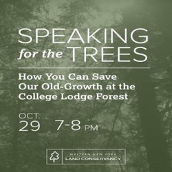 Speaking for the Trees: How You Can Save Our Old-Growth at the College Lodge Forest