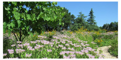 Sunny Gardens, Shady Trees: Summer Arboretum and Garden Tour