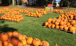 The Pumpkin Patch at St. John's Lutheran