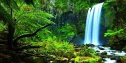 The Rainforest Shaman Sound Healing