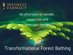 Transformational Forest Bathing