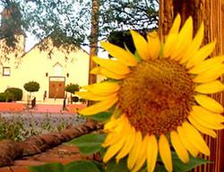 Van Gogh Sunflower Paintout and Auction