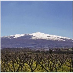 Volcanic Wines! [March 13]