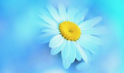 Who Can I Trust When All Else Fails, an Eckankar Perspective