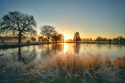 Winter tree identification with The Royal Parks