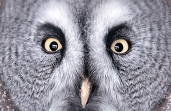 *online* Thinking On Sunday: What Animals Reveal About Human Senses