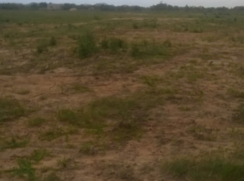 15 Acre Roadside Land For Sale, Accra - Terrain