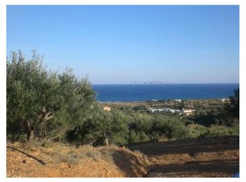 Sitia region:Plot of land of 8300m2 with 150 olive trees. - Grunde