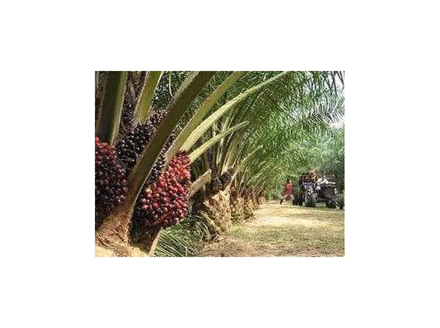 Plot of 29,833.32 acres Agriculture land Segamat , Johor - Land