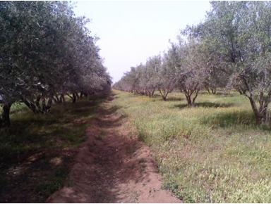 Vente terrain de 5h rte Ourika - Maata
