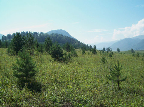 plot for construction on the border of forest &mountains - Land