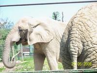 2slonie sloniowa