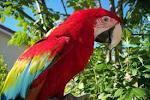 Africa Birds Safety organisation