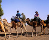 Cameltrekking Excursions
