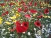 fleur de.the