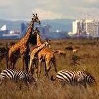 Aslan Adventures Kenya