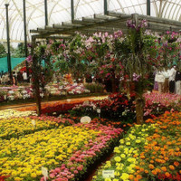Greenhills Nursery Ltd